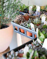 The morning light always highlights the right things   open from 11-7 on Saturdays & Sundays from 12-5 (The ZEN Succulent) Tags: the zen succulent terrarium instagram