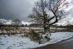 Bradgate Park during winter (mpdphotograhy) Tags: bradgate park country trek walk trail deer canon 5d iii mark neutral density filter sky tree silhouette snow white ground settle leicester swithland winter