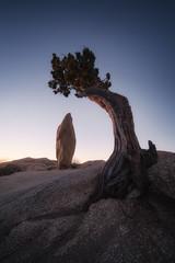 Balance (bryanchong.photo) Tags: balance joshua tree national park nps juniper rock sunrise glow blue rocks jump campground landscape wide angle laowa 15mm f2 sony a7rii