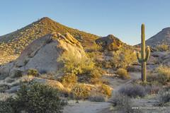 Morning light (doveoggi) Tags: 8393 scottsdale arizona desert morning saguaro boulders mountain