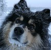 My best hiking companion (evakongshavn) Tags: 7dwf fauna dog bestdogever bestfriendsforever bestdog mansbestfriend womansbestfriend dogsonadventures dogs snowdog dogsofnorway flickrdogs walkingthedog dogsthathike happydog dogme95 coth5 guarddog dogportrait dogphotography snow frost cold ice icybeard frozen winter winterwonderland winterlandscape photoshoot unlimitedphotos sundaylights tier chien thegoldencircle
