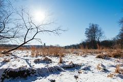 Clarity in desolation (Garen M.) Tags: nikond850 snow cold winter valleyforge nikkor2470mmf28