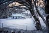 Snow covered cottage (gallowaydavid) Tags: glenlyon winter snow snowscape trees scotland landscape