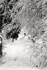 Snow (Antje_Neufing) Tags: schnee winter landschaft hochwald hunsrück januar kalt winterlandschaft reinsfeld rheinlandpfalz