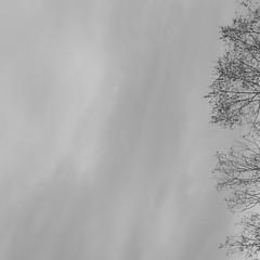 Pardon pour le silence — 22 janvier 2018 (Stéphane Bily) Tags: stéphanebily cover square carré image noiretblanc bw nb blackwhite arbres frondaisons trees ciel tree sky grey
