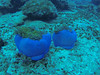 Anemone (Actiniaria) (Peter_069) Tags: tauchen diving scuba malediven maldives äqypten egypt wasser water underwater unterwasser padi fische fisch fish shellfish muscheln moräne moränen moraine batfish fledermausfisch koralle korallen coral nemo clownfisch clownfish boot boat vessel blaueswasser bluewater