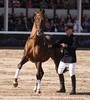 Hengstparade Warendorf (ow54) Tags: hengstparade hengst stallion pferd horse warendorf