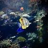 Singapore Acquarium (Zee Jenkins) Tags: fish singapore acquarium underwater