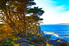 IMG_3490 (CornellBurgessphotography) Tags: seascapes bigsur pointlobos carmelbay california pacificocean montereybay cornellburgess