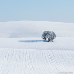 Minimalism (Sue MacCallum-Stewart) Tags: snow minimalism winter landscape blue white trees cold sussex