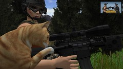 The Forward Assist (alexandriabrangwin) Tags: alexandriabrangwin secondlife 3d cgi computer graphics virtual world photography roscoe ginger pet cat playing pressing forwards assist plunger bolt carrier stuck force soldier player unknown battlegrounds forest combat gun rifle m4 telescopic scope helmet ballistic goggles