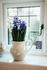 (christilou1) Tags: leica m240 35mm 12 ii asph flowers spring vase window light blue creamy voigtlander