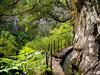 Levada View - Madeira, Portugal (Sebastian Bayer) Tags: landschaft olympus felsen wandern levada wasser omdem5ii wanderung weg omd urlaub madeira wald natur portugal