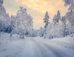 Winter Road (andreassofus) Tags: winter snow cold freezing frost trees sky clouds evening sunset nature landscape outdoor januari winterscene sweden värmland glaskogen glaskogensnaturreservat road woods forest beautiful canon manfrotto nopeople lines leadinglines color colorful colorfulsky