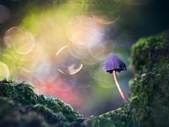 Color explosion (www.studio360fotografia.es) Tags: pentacon80mm setas valdeinfierno proyector projector mushroom fungi bokeh desenfoque explosion colors colores olympus omd em10 macro fantasia fantasy