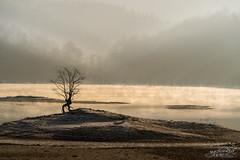 "Stand Alone II Hongcun-Huizhou ""人生過客匆匆,相機抓住每個剎那,與我擦肩而過的人和事"" (CK NG (choookia)) Tags: standalone huizhou china sonya9 sonyfe24240mm goldenhours goodmorning goldenlight sunrise tree travel"