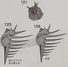 , (o'sorigami) Tags: origami complex satoshikamiya kamiyasatoshi satoshi paper folding paperfolding art tess
