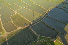 Follow the path! (ashik mahmud 1847) Tags: bangladesh d5100 nikkor line pattern light shadow green people aerial ngc