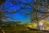 小半天石馬公園夜櫻 (張麗芬) Tags: taiwan 南投縣 鹿谷鄉 小半天 石馬公園 櫻花 夜櫻 夜景 風景 天空