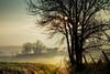 Morning silence (Rita Eberle-Wessner) Tags: landscape landschaft weg path baum tree bäume trees grass gras wiese meadow zaun fence sun sonne sonnenstern blendenstern nebel fog mist