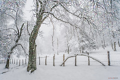 Urkiola cubierto de nieve (Jabi Artaraz) Tags: jabiartaraz jartaraz zb euskoflickr urkiola nieve elurra winter negua frío árbol cerradura seto alambrada nature alambre