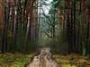 Stanisławów Forest (Arkadious) Tags: forest woods nature las road perspective oak tree trees drzewo drzewa natura green zima winter poland polen polonia polska lodzkie lodz łódzkie treesdiestandingup przyroda