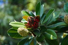 Strange fruit (Steenjep) Tags: madeira portugal ferie holiday urlaub funchal building hotel sea ocean water coast sign