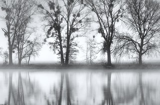 *foggy reflections*