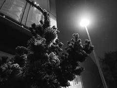 Reykjavik (BurlapZack) Tags: olympustoughtg5 vscofilm pack06 reykjavik iceland is reykjavikiceland street winter snow cold snowing christmas night nighttime streetlamp tree corner sidewalk quiet scandinavia bw mono monochrome availablelight lowlight highiso raw wideangle bokeh dof pointandshoot compact digitalcompact advancedcompact waterproofcamera waterproofcompact toughcompact christmaseve
