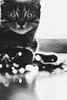 (frogghyyy) Tags: animal gatto ritratto lights bokeh reflections kitty cat portrait macro monochrome biancoenero bw blackandwhite