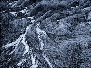 Sea of Grass - 2012