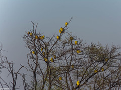 keoldeo-bharatpur-bird-sanctuary-1-3 (100) (jjamwal) Tags: birds birdwatching travel tamron nikon wildlife nature animals india