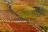 Viñedos en Bandama - Isla de Gran Canaria - ROF0936-20170930 (Fotógrafos en Canarias) Tags: santabrígida grancanaria isladegrancanaria islascanarias canarias paisajescanarios paisajesdecanarias paisajesdegrancanaria fotosdecanarias fotografíasdegrancanaria imágenescanarias postalescanarias panorámicascanarias naturalezacanaria fotógrafosencanarias turismo canarias3d ramónoterofernández canaryislands landscapes canarianlandscapes landscapescanaries landscapesofthecanaryisland landscapesofgrancanaria picturesofcanarias canaryimages photographsofgrancanaria postcardscanaryislands panoramiccanarias naturecanaria photographersinthecanaryisl tourism vinos viñedos viñas parras uvas bodegas lagares vitivinicultores viticultura vinotecas wines vineyards grapes wineries landscapesofthecanaryislands photographersinthecanaryislands bamdama