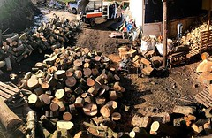 "Managed a couple of hours working through next years firewood pile today with @murphins #wardenstreecare <a style=""margin-left:10px; font-size:0.8em;"" href=""http://www.flickr.com/photos/137723818@N08/28265895829/"" target=""_blank"">@flickr</a>"