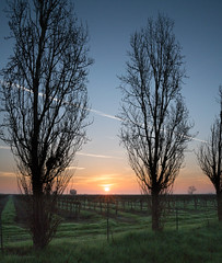 lines (Lisa Ouellette) Tags: agriculture fields futurewine grapes sunrise centralvalley sky wine