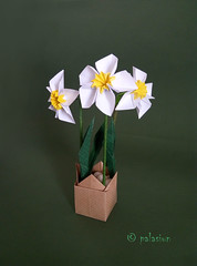 daffodil origami (polelena24) Tags: origami pentagon colored flower plant narcissus paper daffodil jonquil