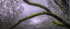 Eerie (keith_shuley) Tags: purple green fog foggy mist misty moss creek stream bull austin texas texashillcountry