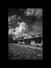 M2460336-Edit (Martin van der sanden) Tags: leesburg leicamonochrom blackandwhite florida