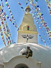 Eyes of the Buddha (Halvorsong) Tags: nepal buddha kathmandu prayerflags colors brightcolors religion religions temples asia himalaya himalayamountains buddhism travel worldtravel composition photography photosafari tibet india old