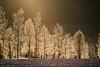 Frosty (pelnit) Tags: frost frosty norway norge akershus lørenskog trees trær nature natur snø snow winter vinter petlnit