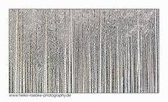 Verschneit / snowy (H. Roebke) Tags: 2018 schnee de canon5dmkiv color landschaft nature germany wald harz colour abstract baum tree abstrakt forest brocken snow winter canon1635mmf28lisiii landscape farbe lightroom natur