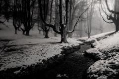 Hayedo de Otzarreta, Bizkaia (jesbert) Tags: hayedo otzarreta bizkaia euskadi pais vasco vasque country spain españa beech tree winter snow nieve invierno sony a7r2 1635mm blanco y negro black white