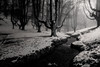 Hayedo de Otzarreta, Bizkaia (jesbert) Tags: hayedo otzarreta bizkaia euskadi pais vasco vasque country spain españa beech tree winter snow nieve invierno sony a7r2 1635mm blanco y negro black white
