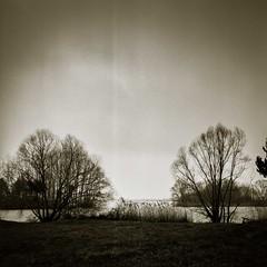 Fevrier 2018 Troyes-3 (photosreggar) Tags: bnw black noir nb landscape trees paysage sepia film camera minolta autocord analogique troyes carré square