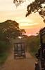 Sri_Lanka_17_186 (jjay69) Tags: srilanka ceylon asia indiansubcontinent tropical island jeep transport 4x4 4wheeldrive offroad dirtroad mahindra mahinda tourist tourism nationalpark yala yalanationalpark wildlifetour wildlifespotting animalviewing viewing wildlife susnet sunsetting dusk
