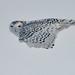Snowy Owl (mikestreicher) Tags: snowyowl owl