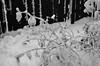 03.05 storm (dear emma rae) Tags: blackandwhite winter photography monochrome monochromatic storm winterstorm winterof2018 winterphoto canada