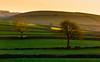 Golden Trees (Peter Quinn1) Tags: goldentrees winter litton january whitepeak peakdistrict derbyshire