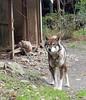 "65-Sankakuji-022 (photozaki) Tags: ""dogs cats"" dog dogs inu cat cats neko shikoku japan ohenro88 ohenro pilgrimage"