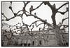 Sistema nervioso (lhuiso) Tags: leicam6 leicamforo leica 21mmcolorskopar tmax100 zamora arboles